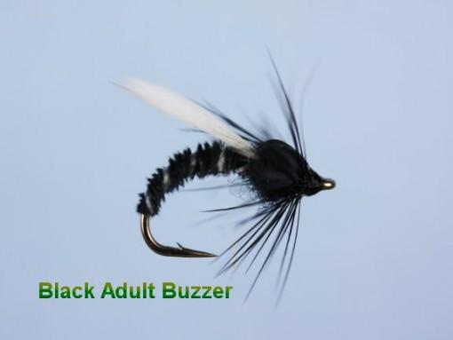 Black_Adult_Buzz_4e298a0ecc7bc