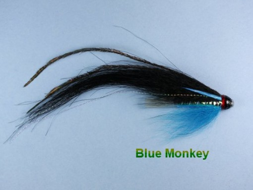 Blue_Monkey_Fish_4e295d99d7cc5